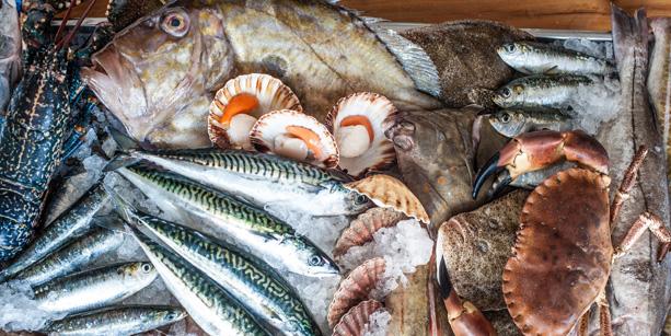 fishandshellfish613x307