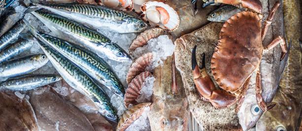 purchasingfishblog613x266